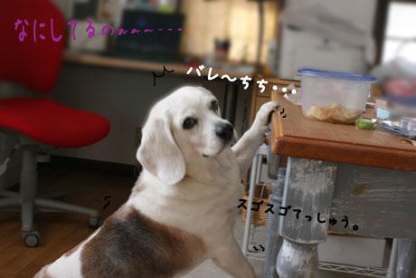 2_20110326173330.jpg