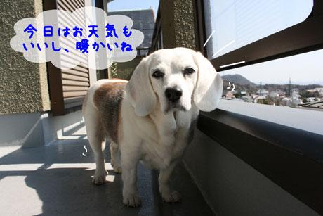 2_20110328104621.jpg