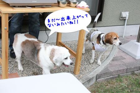 3_20091025151816.jpg