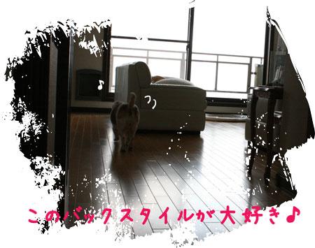 3_20091102152935.jpg