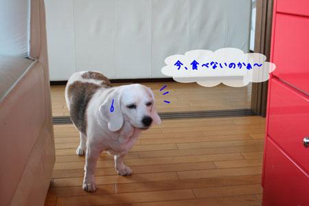 3_20091121211544.jpg