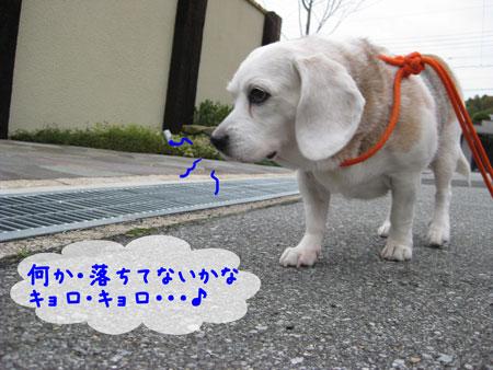 3_20091124140702.jpg