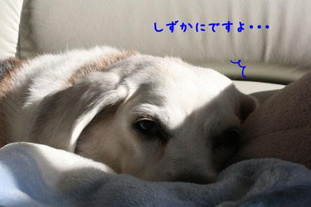 3_20091127194028.jpg