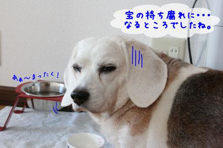 3_20091201163021.jpg