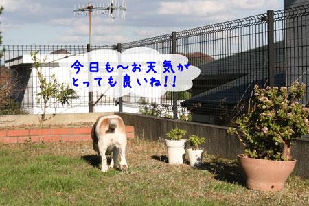 3_20091202152436.jpg