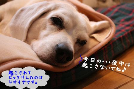 3_20091211134605.jpg