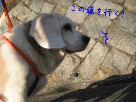 3_20091214160844.jpg