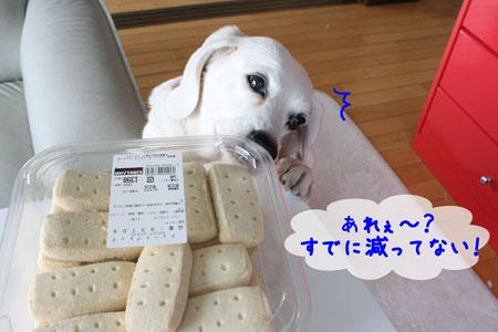 3_20091217175709.jpg