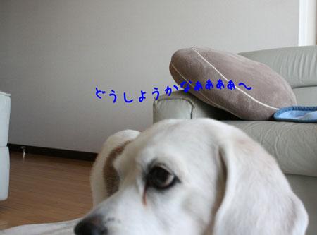 3_20091218123052.jpg