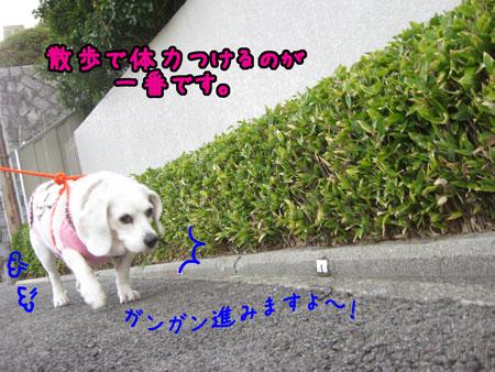 3_20091220232157.jpg