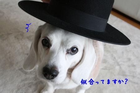 3_20091224210356.jpg