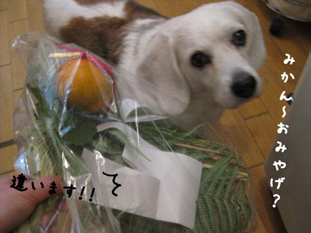 3_20091227195614.jpg