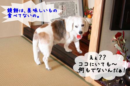 3_20100102165427.jpg