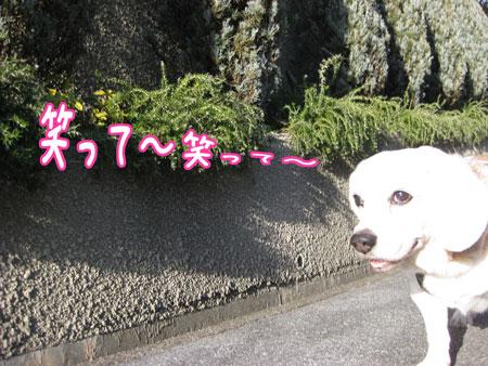 3_20100106141907.jpg