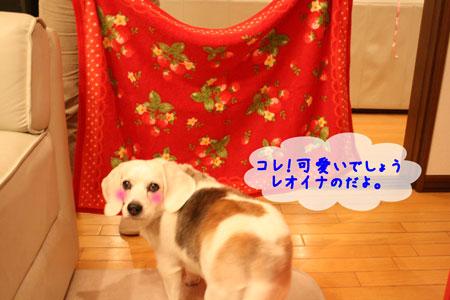3_20100107203110.jpg