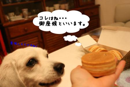 3_20100108153034.jpg