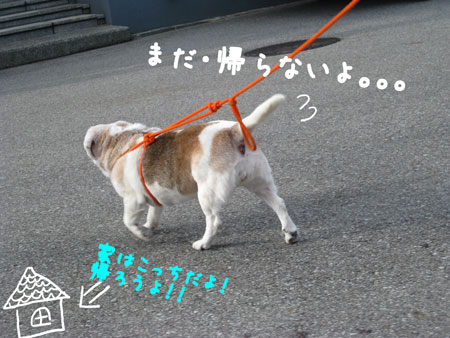 3_20100109162330.jpg
