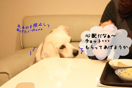 3_20100128144023.jpg