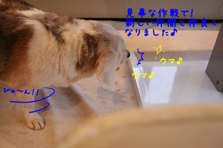 3_20100202152910.jpg
