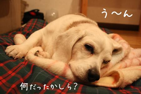 3_20100203215603.jpg