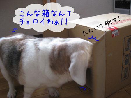 3_20100206135638.jpg