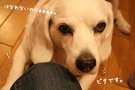 3_20100217183209.jpg
