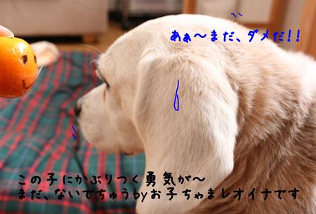 3_20100228174508.jpg