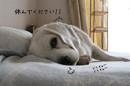 3_20100302235109.jpg