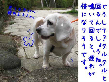 3_20100418161527.jpg