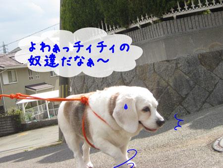 3_20100424175049.jpg
