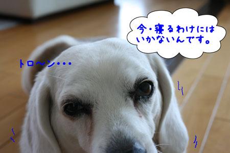 3_20100425125332.jpg