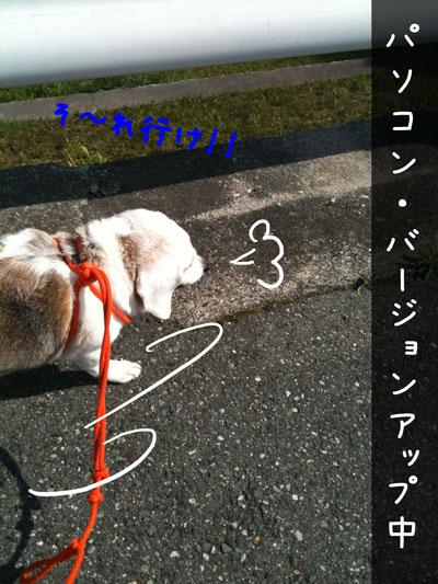 3_20100429215555.jpg