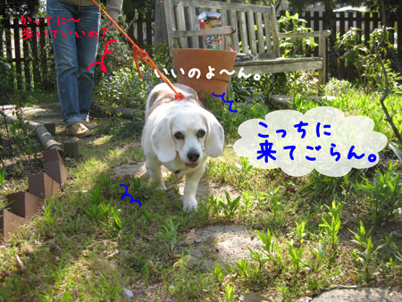 3_20100501213701.jpg