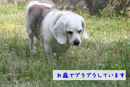 3_20100506144105.jpg