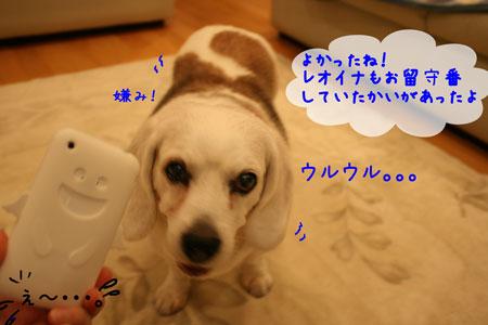 3_20100517215630.jpg