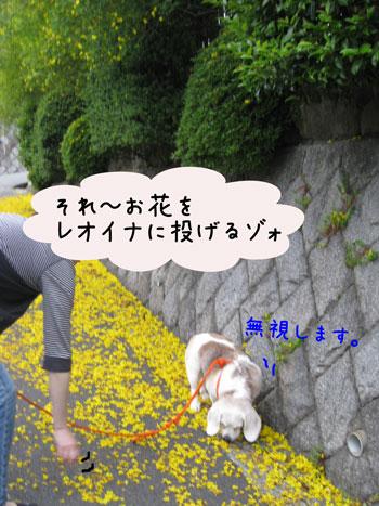 3_20100523125625.jpg