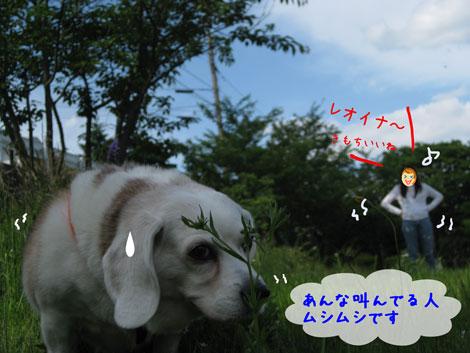 3_20100531164725.jpg