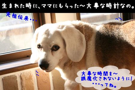 3_20100602180555.jpg