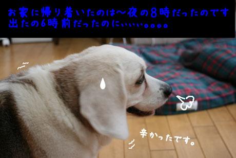 3_20100604140927.jpg