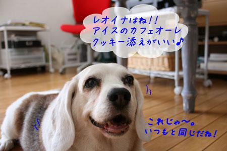 3_20100611154339.jpg