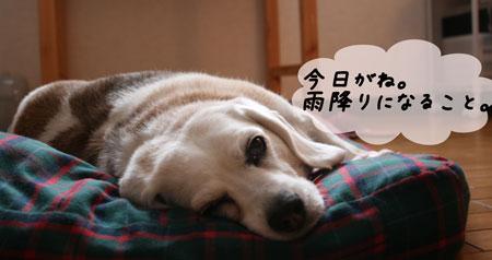 3_20100613165759.jpg