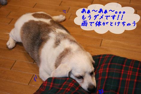 3_20100618155523.jpg
