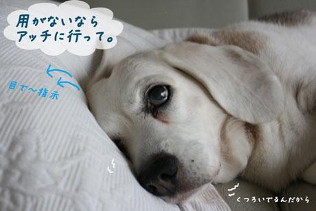 3_20100625135840.jpg