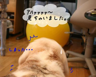3_20100626153236.jpg