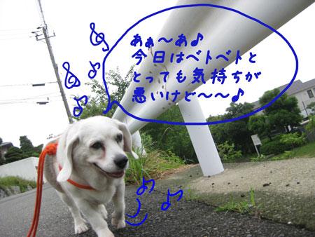 3_20100627143334.jpg