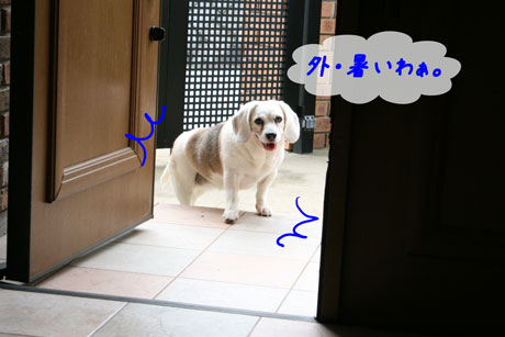 3_20100628163747.jpg
