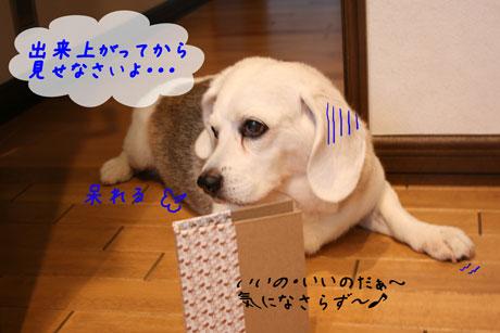 3_20100711162217.jpg