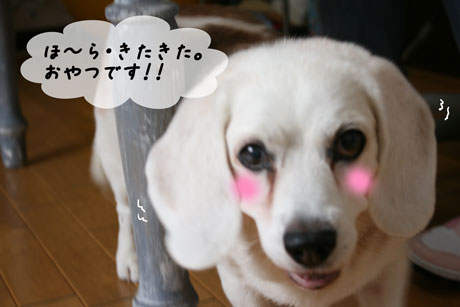 3_20100712154236.jpg