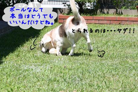 3_20100720162909.jpg