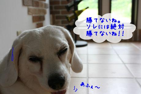 3_20100730141623.jpg